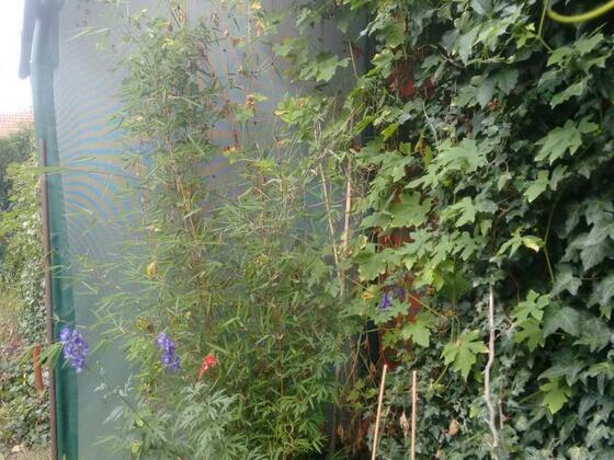 Seitenansicht Leider mußte ich wg diversen Änderungen (Neubepflanzung mit einem Fargesia Bambus) einen Teil der Begrünung entfernen