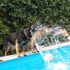 Hundepool  4